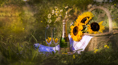 Enjoy the good times.. (Photography by Julia Martin) Tags: photographybyjuliamartin enjoythegoodtimes celebrate graduate passexams champagne summer meadowflowers sunflowers explore62