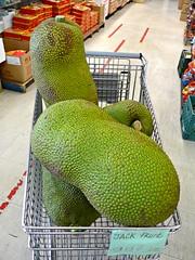Jackfruit (ali eminov) Tags: trees fruits jak jackfruit fruittrees jacktree artocarpusheterophyllusjackfruittree