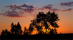 At the end of a wonderful day (zilverbat.) Tags: spanje travel visit image sunset sunlight bookcover postcard zilverbat sky trees tripadvisor spain nature natuur coca extremadura