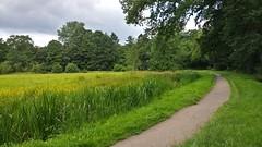 Asserbos in Assen (willemsknol) Tags: willem s knol