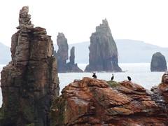 Braewick Stacks and the Drongs, Shetland, 21 July 2016 (AndrewDixon2812) Tags: stack rock shags drongs braewick hillswick northmavine eshaness shetland bay headland peninsula cliffs