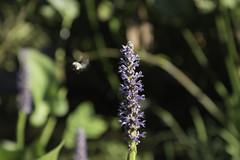 DSC_0519 (hosam alshanawany) Tags: lr lightroom nature norfolk va usa botanical garden d750 nikon nikkor 2485 af