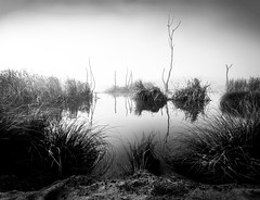 Swamp Noir: Expanded (ajecaldwell11) Tags: silhouette trees reeds hawkesbay sunrise reflection pekapekaswamp newzealand dawn water sky fog mist clouds noir light