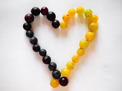 Grape harvest (I'm_alfy) Tags: grapevine harvest grape september wine love red white food minimalism defects