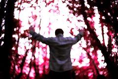 Icarus. (Elliot Tratt) Tags: plant plants natural unnatural portrait landscape tree trees bokeh outoffocus canon eos 5d 5dm2 fine fineart art concept conceptual focus lackoffocus blood rain death dying dark icarus cornwall 2016