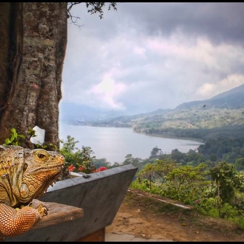 #Bali's central highlands with a new #friend - #iguana #reptile #travel #adventure. Good stuff