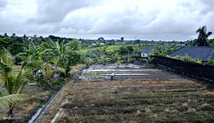 Working on the fields. (alamsterdam) Tags: bali farmer ricefields