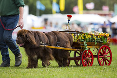 Kent_County_Show_2014_Highlights_072