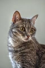 Mil5 (ansacariofoto) Tags: cats nature animals cat tokina gatti animali tokina100mmf28atxprod nikond5000