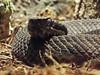 DSCF0183 (Stonehenge 68) Tags: zoo birmingham snake alabama lizard plantation antebellum birminghamzoo arlingtonhouse