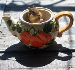 chipmunk (thaneladner) Tags: chipmunk teapot cute sitting summer cottage camping outdoors animals green