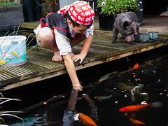 DSCF2271 (ronaldzijlstra2) Tags: kid son boy dog cairnterrier koi vis vish vijver pond