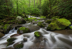 Great Smoky Mountains Roaring Fork Spring Greens (Mark VanDyke Photography) Tags: green landscape outside outdoors photography moss spring rocks stream tn tennessee seasonal gatlinburg smokies smokymountains roaringfork greatsmokymountains greatsmokymountainsnationalpark gsmnp mountainstream roaringforkmotornaturetrail