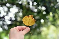 leave (azyef94) Tags: nature naturephotography leaf leave blatt nikonphotography bokeh ilovenature flickrnature nikonflickraward bokehawards bokehphotography colorsoftheworld