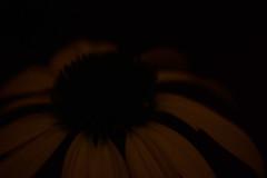 A flower (elisakankaala) Tags: closeup flower minimalism simple contrasts