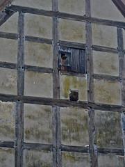 Vogel Asyl (web.werkraum) Tags: vogelasyl dorfkirchethurow mecklenburgvorpommern unterwegs ks webwerkraum wegzeichen wand giebel gitter deutschland fachwerk detailaufnahme karinsakrowski berlinerknstlerin dasdasein europa germany juli omot tagesnotiz urban vogel quartier flickrnova