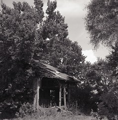Chewed up, but not yet swallowed (matthew.vortex) Tags: barn trees abandoned building rural georgetown kentucky tkk beautycords vintage japanese tlr mediumformat manual sunnyf16 ilford delta100 ilfosol3