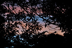 Seen It Through (Funkomaticphototron) Tags: coryfunk summer sunset pink blue leaves trees sillouette dof outdoors mn minnesota