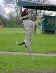 Sherdley Park Dog (Keithjones84) Tags: park dog dogs sthelens sherdleypark