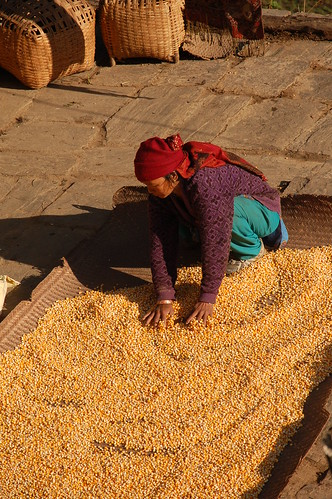 "d11 Jhinu - Naya Pul - Pokhara (3) <a style=""margin-left:10px; font-size:0.8em;"" href=""http://www.flickr.com/photos/125852101@N02/17687067068/"" target=""_blank"">@flickr</a>"