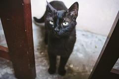 Trick or treat? (Brînzei) Tags: cats animals eyes bokeh ears moustache vignette manualfocus straycats ★ bucurești sigma24mmf28superwideiimulticoated sonynex7