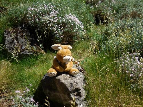 Teddy Longear enjoying the sun