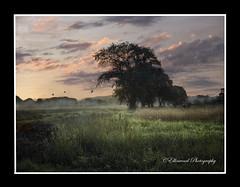 Kindred Spirits (windshadow2) Tags: morning school trees light mist field fog sunrise river shadows meadow olympus hudson omd em1