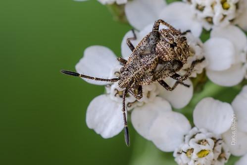 Bugs child