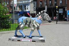 IMG_7054 - Zebby Road - Southampton - 23.07.16 (Colin D Lee) Tags: zany zebra abbey road zebby marwell zoo beatles