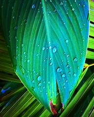 Rain drops... #shotonmylumia #lumia #lumia1520 #raindrop #raindrops #water #waterdrop #waterdrops #lumiaphotography #lumia1520photography #photography #shotonmylumia1520 #flickr #instagram #nature #naturelover #naturelovers #natural (Kunal-Chowdhury) Tags: ifttt instagram rain drops shotonmylumia lumia lumia1520 raindrop raindrops water waterdrop waterdrops lumiaphotography lumia1520photography photography shotonmylumia1520 flickr nature naturelover naturelovers natural