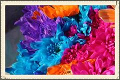 IMG_9146 (Sole & Luna) Tags: fiori colori blu intenso azzurro rosa arancione petali primopiano natura ambiente piante regalo emozione