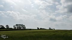 Denmark 2016 (judithrouge) Tags: summer field grass clouds denmark sommer urlaub feld wolken dänemark vacatin