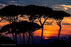 VINTAGE RITORNO A BARATTI POSTI INDIMENTICABILI X ME !! BUONA SERATA:-)) GRAZIE (Roberto.mac.) Tags: baratti toscana paesaggi indimenticabili colori natura tramonti sera controluce alberi mare robertomac
