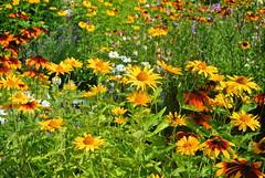 English Flower Garden (ivlys) Tags: darmstadt kranichsteinerstrase englishflowergarden schild sign blumen flowers nature ivlys
