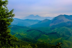 LandScape(IMG_3740-1) (rabidash*) Tags: tea gardens nature trees plants rabi rabidash rkdash rabindra beautiful