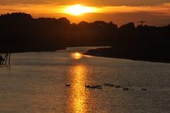 Sunlight over the Blackwater (amanda.parker377) Tags: reflectedsunlight riverreflections brentgeese waterfowl riverblackwater maldon essex england orange yellow sunsetcolours