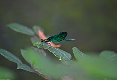 Amazing insect. (Stefania Bianco) Tags: cool like flickr italy nature lepidotteri green blue amazing interesting wow aww awesome fantastic natura travel pic