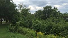 8/21/16 Burlington Vermont Time-lapse (MitchellJONeill) Tags: timelapse clouds movie movement sky water boat waves