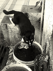 GOtcha (pooncu) Tags: cat straycat drinking water blackwhite street