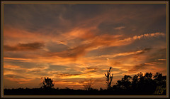 Deep in the heart of Texas (WanaM3) Tags: wanam3 sony a700 sonya700 texas houston vista park elfrancoleepark