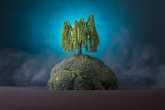 Island (William John Cooper) Tags: studio studiolighting lighting flash tabletop tabletopphotography still stilllife art fineart food paper landscape miniature model tree willow broccoli blue sea ocean island