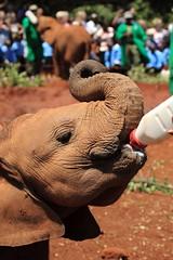 (Hassaneini) Tags: kenya da davidsheldrick كينيا
