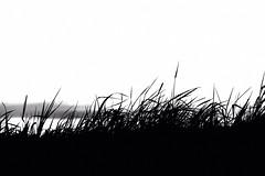 (Pea Jay How) Tags: sky blackandwhite cloud grass silhouette contrast evening horizon