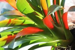 Brilliant Plant