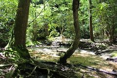 IMG_0924 (dr.demoss) Tags: white virginia rocks hike ewing sandcave