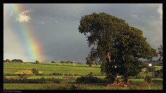 evening shower (Neil Tackaberry) Tags: county summer tree green rural landscape shower evening countryside rainbow hill scenic scene farmland kerry pasture co countykerry 2016 cokerry