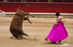 Untitled (shakyphoto) Tags: spain san europe bull bulls bullfight pamplona fermin matador