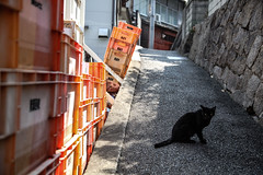 (ogizooo) Tags: canon 5dmark2 sigma24105mmf4dgoshsm cat alley alleycat japan straycat