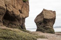 The Hopewell Rocks, also called the Flowerpots Rocks or simply The Rocks (Jim 03) Tags: hopewell flowerpots rock rocks tidal formations ocean new brunswick 4070 bay fundy cape marine wonders world tides jim03 jimhoffman jhoffman jim wwwjimahoffmancom wwwflickrcomphotosjhoffman2013 seaweed