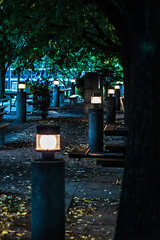 The Lit Canopy (Graydon Armstrong) Tags: lights leaves lighting northyork toronto street empty leaf park green garden lamps trees dusk